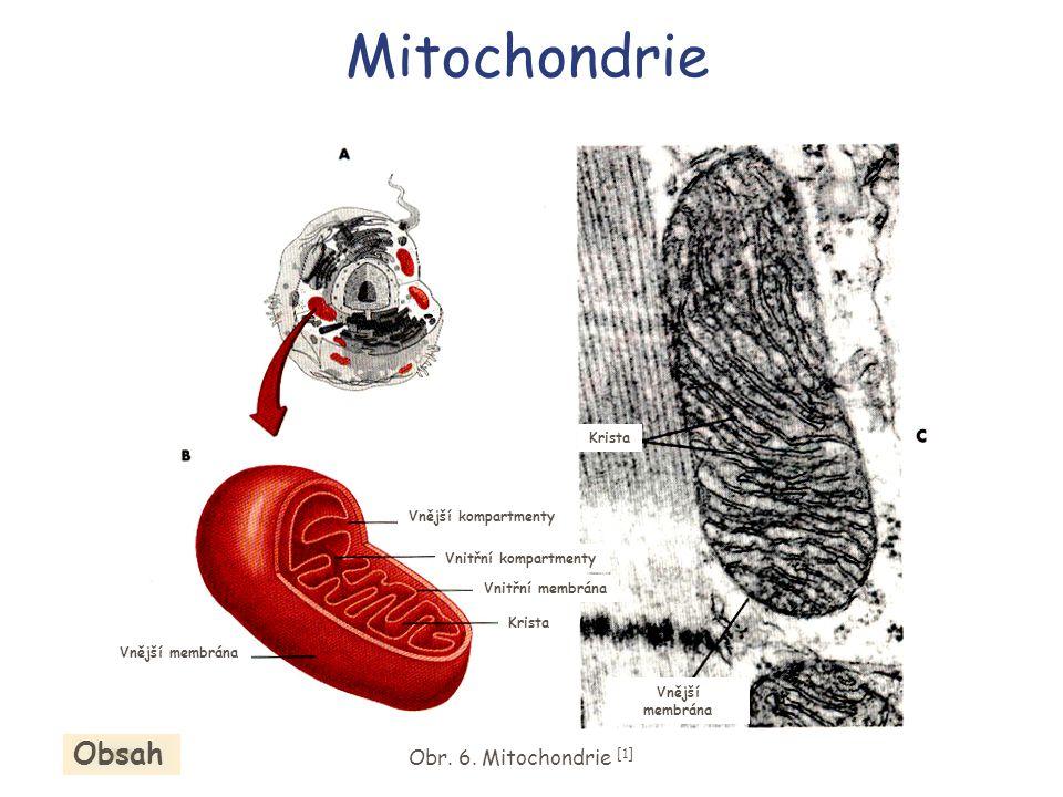 Mitochondrie Obsah Obr. 6. Mitochondrie [1]